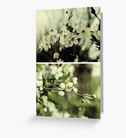 Spring - Cherryblossom Green Greeting Card