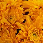 Yellow Mellow Mums by Marijane Moyer  Morsett