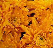 Yellow Mellow Mums by Marijane  Moyer