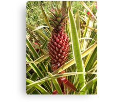 *•.¸♥♥¸.•* .(。◕‿◕。)Pineapple Grows In Hawaii*•.¸♥♥¸.•* .(。◕‿◕。) Canvas Print