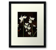 """""""Orchids of Singapore"""" Framed Print"""