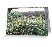 Spiderweb on the Ruins Greeting Card