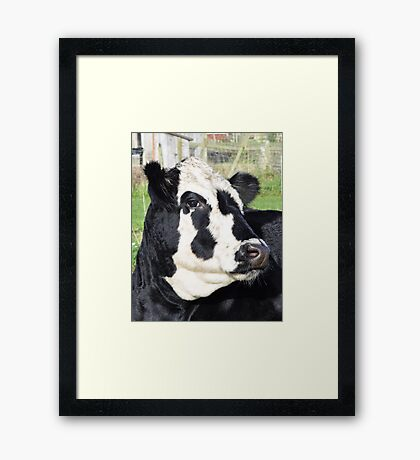 Smart Bull Framed Print
