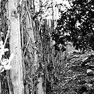 Tree Border by Madison Jacox