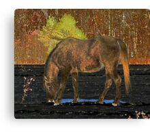 The Water Hole Canvas Print
