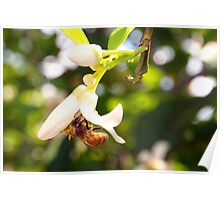 Blossoming Spring Poster