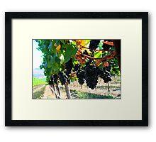 Fiddlestix Vineyard Framed Print