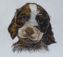 Barney, a gorgeous puppy by BarbaraBird