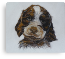Barney, a gorgeous puppy Canvas Print
