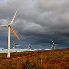 Windmills by Madison Jacox