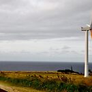 Single Windmill by Madison Jacox