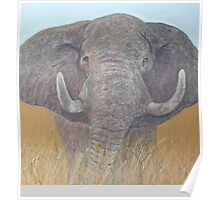 Elephant in the Grass Poster