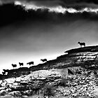 Sheep Silhouette by Sue Knowles