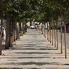 Treelined Street by NickSpiros