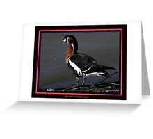 The Red Breasted Goose Greeting Card