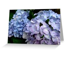 Hydrangeas, Blue and Lavender Greeting Card