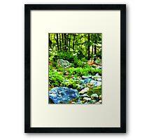 Evergreen Forest Framed Print