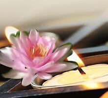 light of zen by win charles