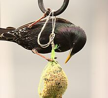 Bird Feed, not seed by Harry Purves