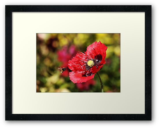 Bee and Poppy by Harry Purves