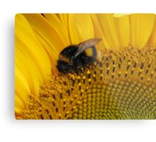 Bumble Bee Walk Metal Print
