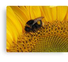 Bumble Bee Walk Canvas Print