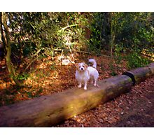 a dog with a mission Photographic Print