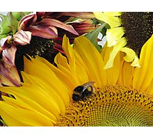 Bumble Bee Dance Photographic Print
