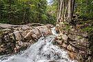 Pemigewasset river II by PhotosByHealy