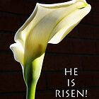 &quot;he is risen&quot; calla lily by dedmanshootn