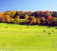 New England Autumn Meadow by Alberto  DeJesus