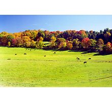 New England Autumn Meadow Photographic Print