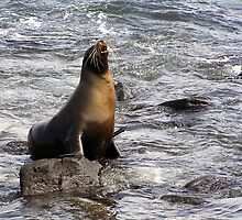 A Sea Lion in the Galapagos Islands by Tim Bowron
