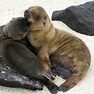 Sea Lion Pups  by Tim Bowron