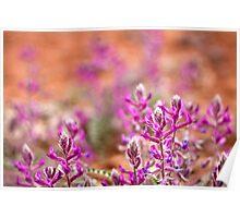 Desert Springtime Poster