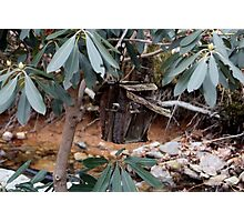 Rustic Birdhouse Within The Branches Photographic Print