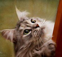Sassy by janetlee