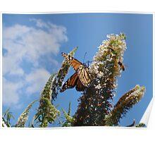 Monarch Butterfly & Honeybees on Butterfly Bush Poster