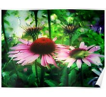 Cone Flowers ©  Poster