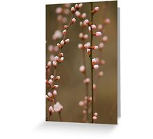 spring series two Greeting Card