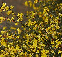 spring series three by davvi