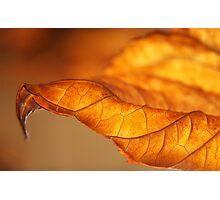 Hydrangea Leaf Tip Photographic Print