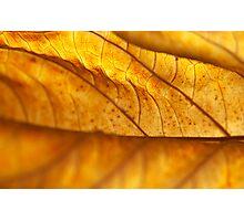 Hydrangea Leaf Macro Photographic Print