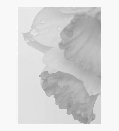 White Spring Photographic Print
