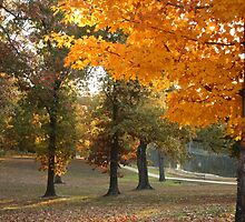 Fall at Old Davidsonville State Park by Susan Blevins