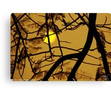 sunrise 01 Canvas Print