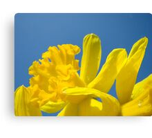 Daffodil Flowers Glowing Spring art prints Baslee Troutman Canvas Print