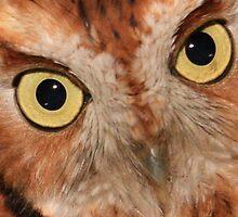 Owl Eyes by Marcella Hadden