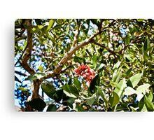 Fruit Flower Canvas Print