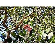 Fruit Flower Photographic Print